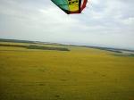 blog_sunflower_field